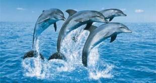 Contact met de walvissen en dolfijnen