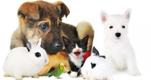 rabbit, dog, cat and parrot